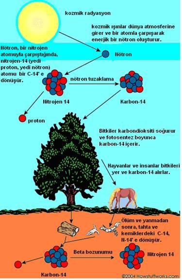 Karbon-14 ile Yaş Tayini Nasıl...